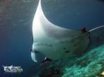 Kepulauan Derawan Berau 17-20 Agustus 2017