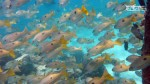 Kepulauan Derawan Berau 11-14 Mei 2017