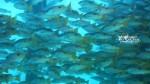Kepulauan Derawan Berau 21-24 September 2017