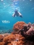 Discovery Derawan Islands 24-26 Mei 2013