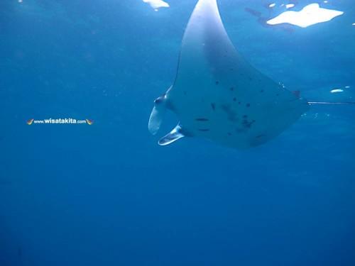 Kepulauan Derawan Berau 25-27 Oktober 2019