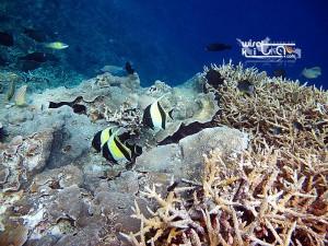 Kepulauan Derawan and Labuan Cermin with Whaleshark 07-10 Mei 2020