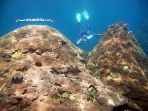 Kepulauan Derawan and Labuan Cermin Explore with Whaleshark 27-31 Mei 2020 Private 3 Orang