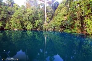 Kepulauan Derawan and Labuan Cermin Explore with Whaleshark 23-27 Agustus 2019
