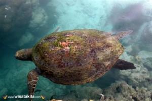 Karimunjawa Weekly Adventuring Via Bahari Express 15-17 Januari 2021