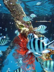 Karimunjawa Weekly Adventuring (Via Bahari Express) 20-22 Nopember 2017