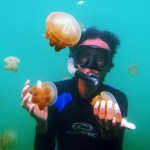 jelly fish kakaban island derawan