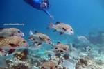 Kepulauan Derawan Berau 28-31 Desember 2015