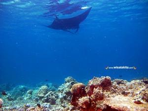 Kepulauan Derawan Berau 24-26 Desember 2018