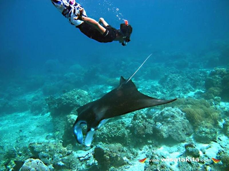 Berenang bersama ikan manta di pulau Sangalaki