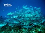 Wakatobi Fun Adventuring Trip 18-21 September 2014