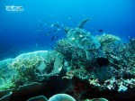 Wakatobi Fun Adventuring Trip 11-14 September 2014