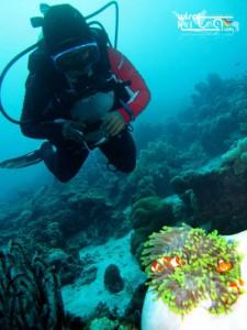 Diving dengan nemo di Wakatobi