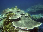 Karimunjawa Weekly Adventuring 06 - 09 September 2013