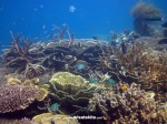 Karimunjawa Weekly Adventuring 26-29 September 2014