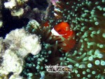 Karimunjawa Weekly Adventuring  11-13 April 2015