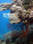 Karimunjawa Weekly Adventuring 28 - 30 September 2013