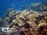 Karimunjawa Weekly Adventuring 20-21 September 2014
