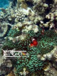 Karimunjawa Weekly Adventuring 14 - 15 September 2013