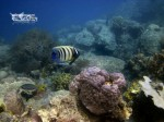 Karimunjawa Weekly Adventuring  13-15 September 2014