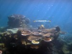 Karimunjawa Weekly Adventuring 29 April - 01 Mei 2013