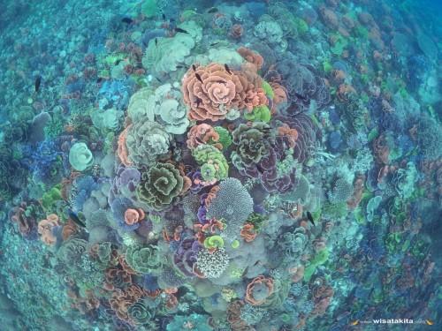 Coral Garden Karimunjawa