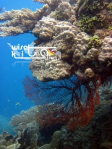 Karimunjawa Weekly Adventuring 29 Maret-01 April 2019