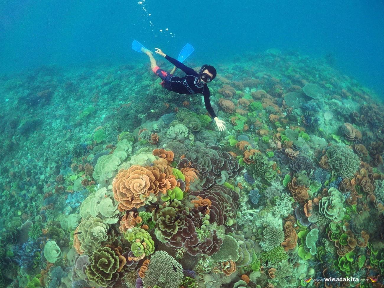 Coral Garder Karimunjawa