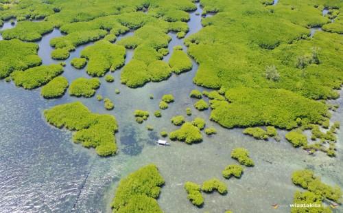 Hutan Magrove Selayar