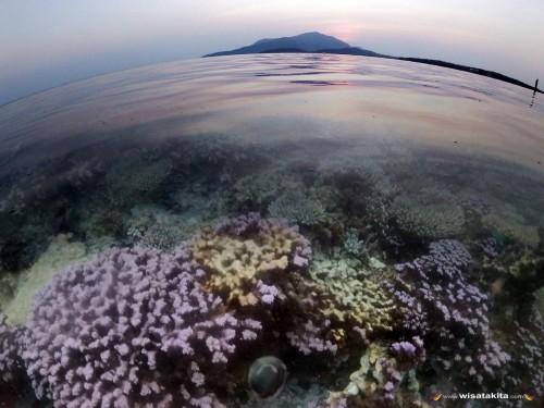 Coral Garden Pulau Kecil Karimunjawa