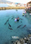 Karimunjawa Weekly Adventuring 27 - 30 September 2013
