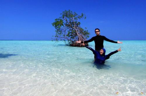 Pohon mangrove Karimunjawa