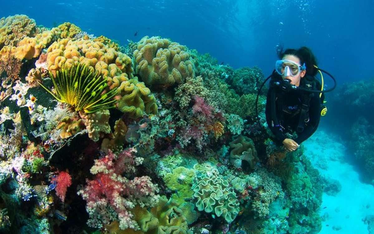 Underwater Wakatobi
