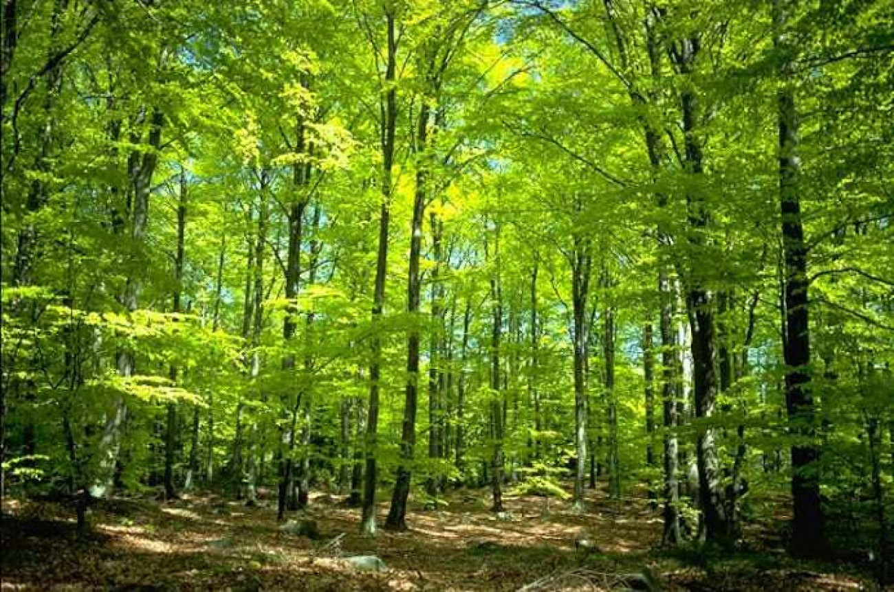 Taman Hutan Raya Ngargoyoso